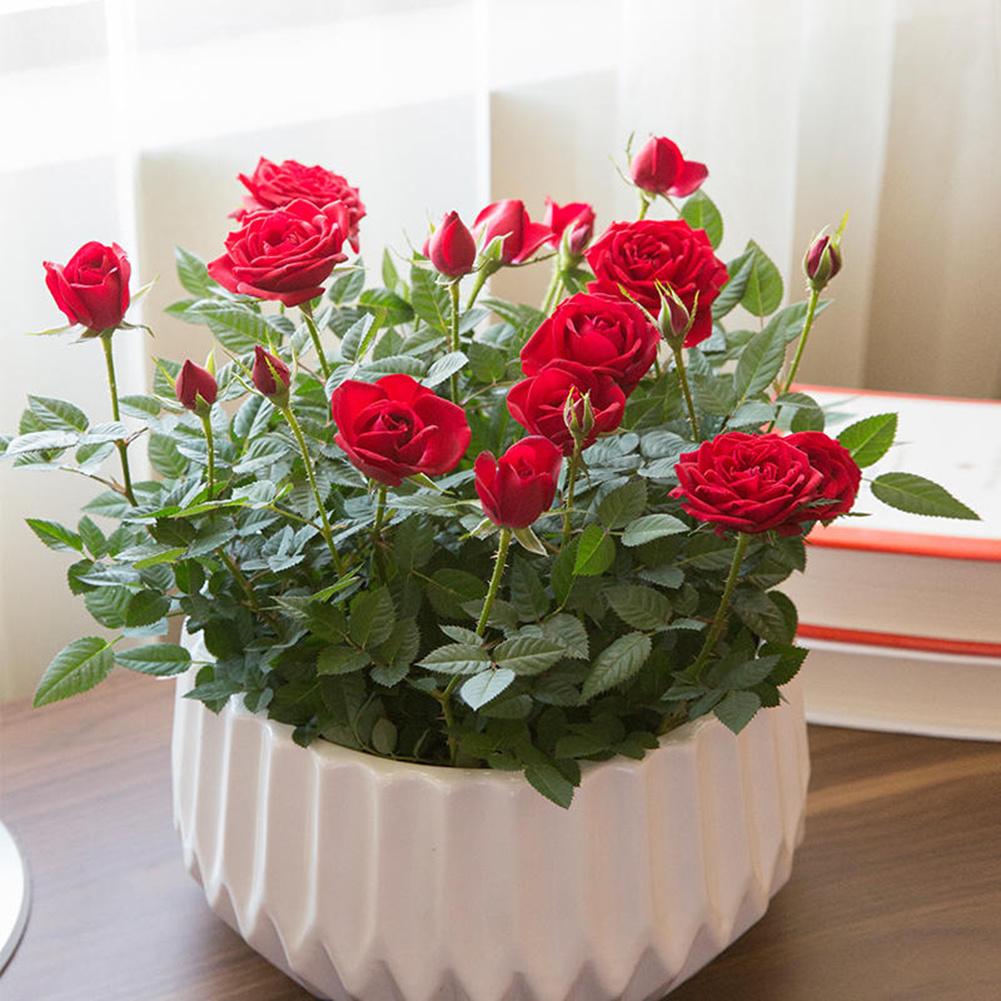 роза в интерьере
